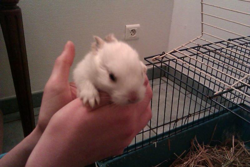 Urgent 9 bébés lapins à donner né le 25/12/2011 Imag0115