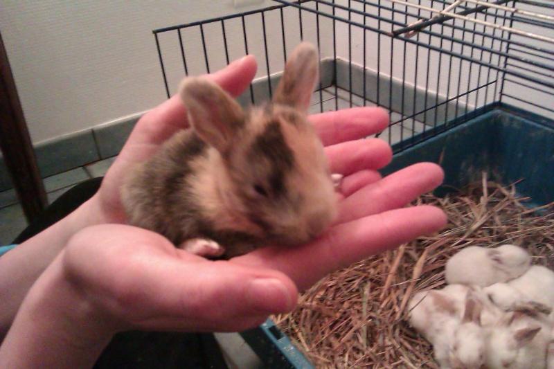 Urgent 9 bébés lapins à donner né le 25/12/2011 Imag0120