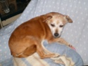 Adoptions urgentes chiens
