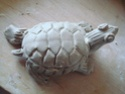 """Coupe """"feuille avec tortue de Floride"""" Dsc08733"""