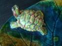 """Coupe """"feuille avec tortue de Floride"""" Dsc09031"""