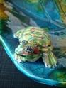 """Coupe """"feuille avec tortue de Floride"""" Dsc09032"""