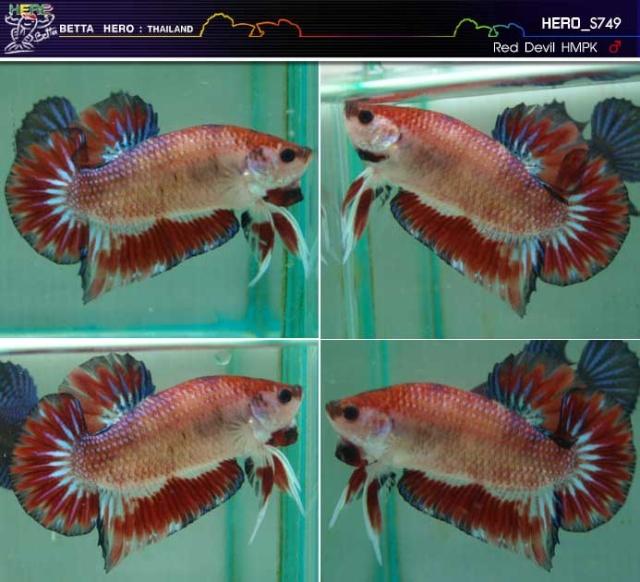 Jeunes pk (dt et geno dt) issus de repro mg X mg dragon - Page 4 Fwbett12