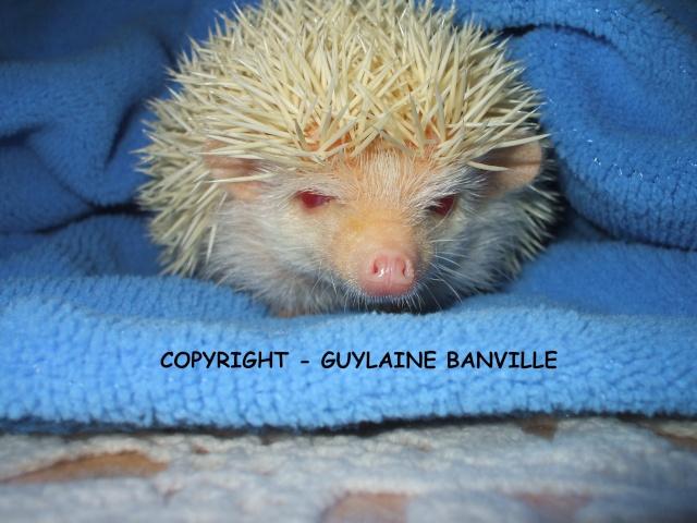 Attention Coco - Guylaine est chez moi Le_18_13