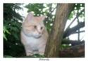 Mes chats Nougat et lily Ap3010