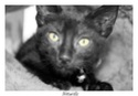 Mes chats Nougat et lily Ap3810