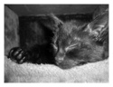 Mes chats Nougat et lily Ap4110