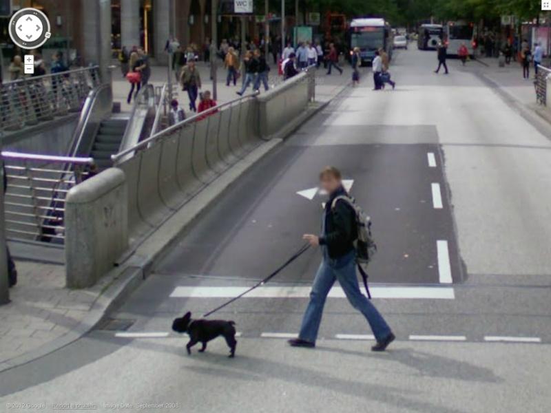 STREET VIEW:les chiens domestiques dans les cours ou en laisse dans les rues !  Bulldo10