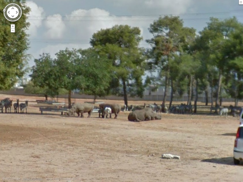 STREET VIEW : Les animaux - Page 7 Rino10