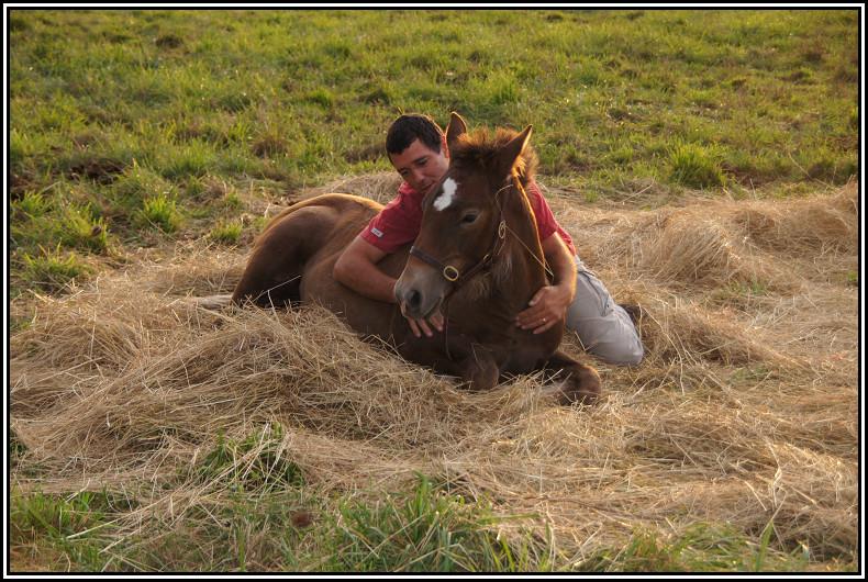 Thème juillet 2012 : Quand cheval rime avec poésie.... Dsc01970