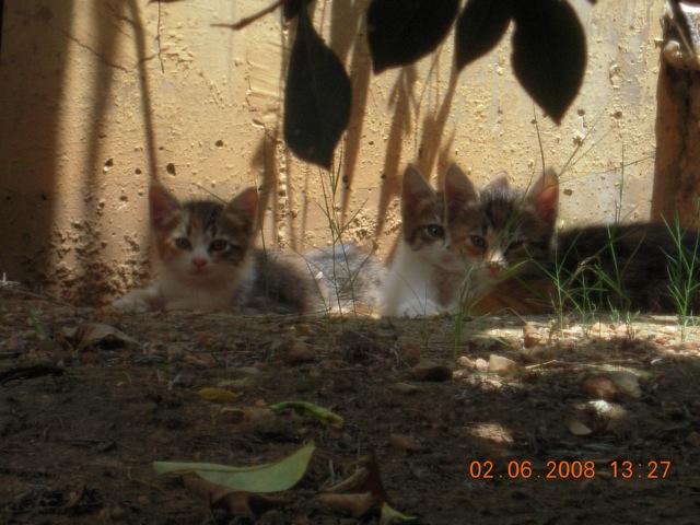 Η Ασπρομαυρούλα έχει 4 γατσούνια... Kitts10