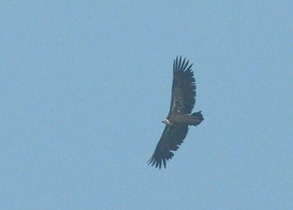 Maroc - Photos oiseaux Clipb376