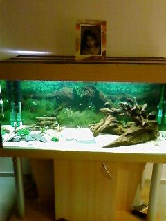 créer un forum : aquariophilie bouche du rhone - Portail Sp_a0110