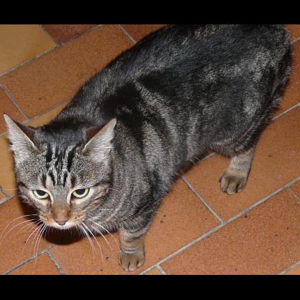 Trouvé chat tigré sur les pistes de l'aéroport à Blagnac 41613_10