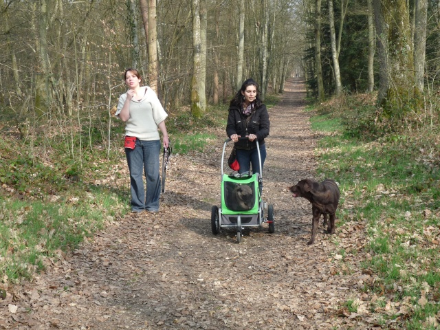 Modes de transport pour petits / vieux chiens qui fatiguent vite P1100110