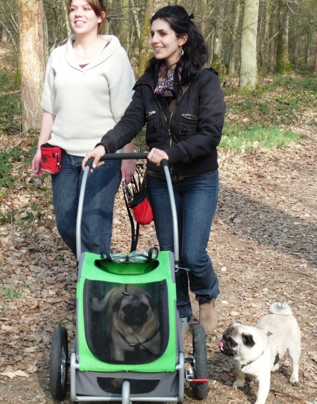 Modes de transport pour petits / vieux chiens qui fatiguent vite P1100111