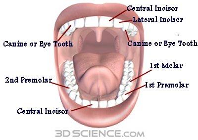 Dentist Badge Dentis12