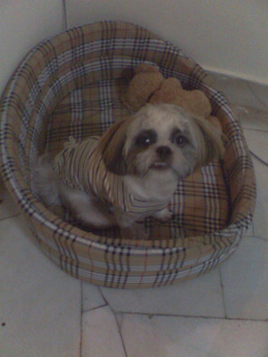 Share your furkid's bed and toy Abcd0010