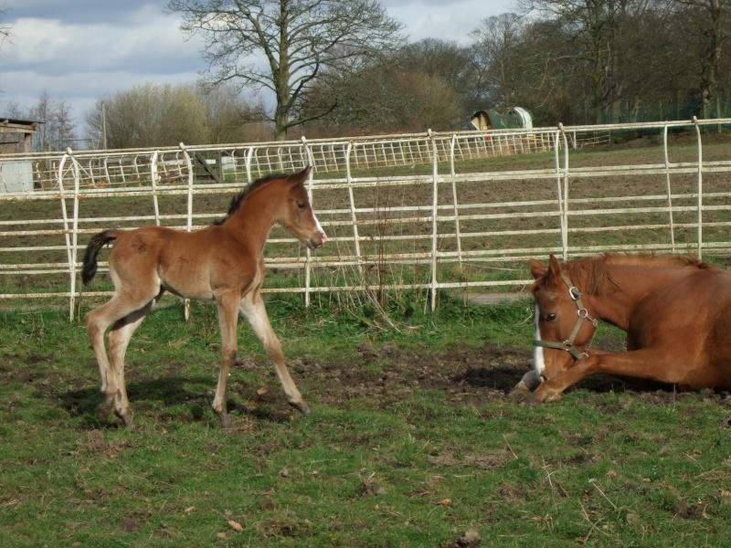 Foal Update Colt_q11