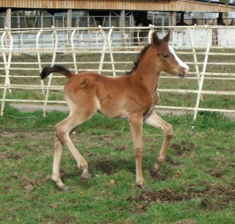 Foal Update Dscf5910