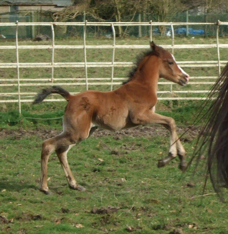 Foal Update Dscf5911