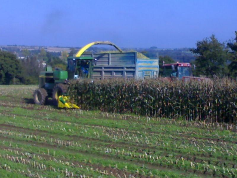 Ensilage de maïs 20102010