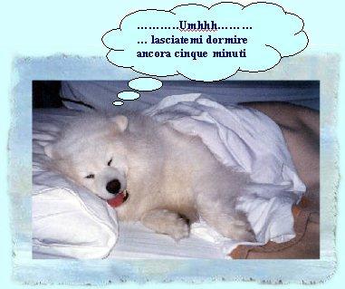 L'arca di noè - Pagina 4 Dormir11