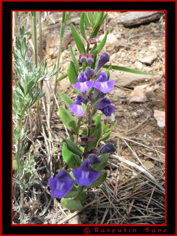 The painstaking hunt... Flower10