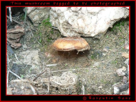 The painstaking hunt... Mushro10
