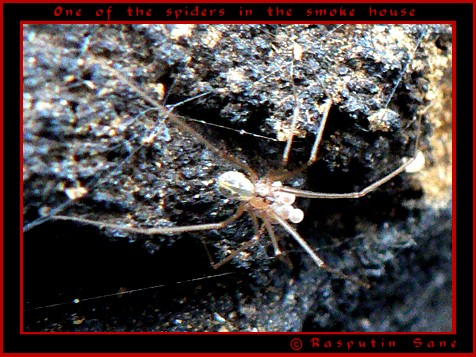 The painstaking hunt... Spider10
