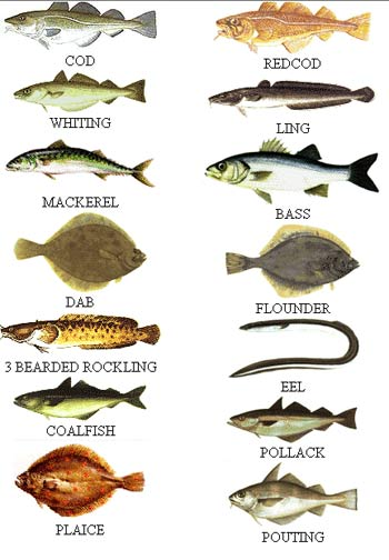 SEA FISH CHARTS Fishsp10