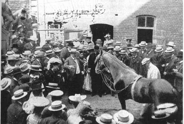 quelques chevaux historiques Clever10