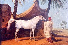 quelques chevaux historiques Visir10