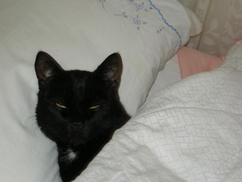 Cali, Calimero el primer gato que entró en EF Cali10