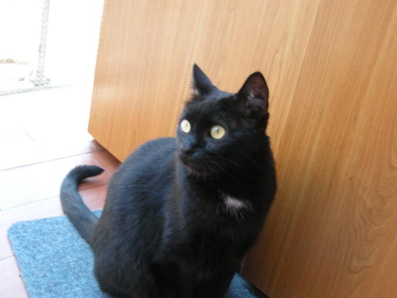Cali, Calimero el primer gato que entró en EF Cali110