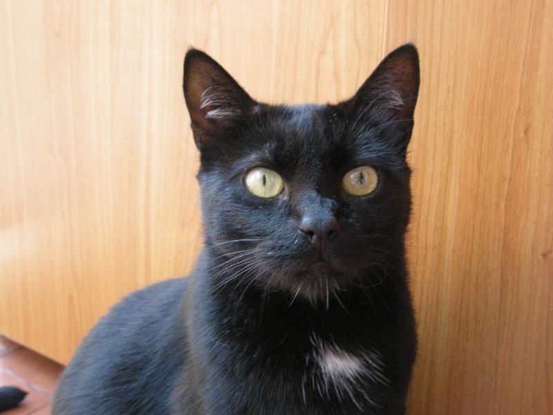 Cali, Calimero el primer gato que entró en EF Cali210