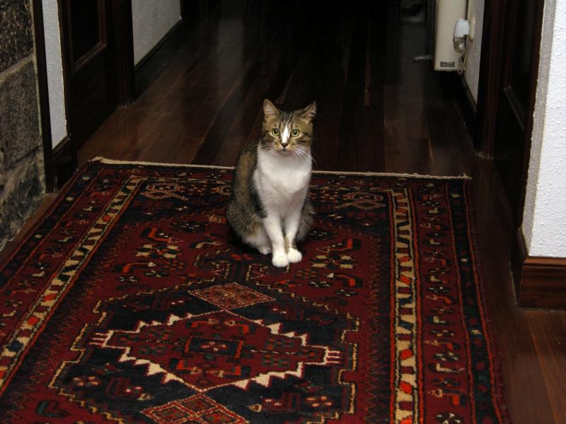 Moli preciosa gata de dos años en adopción. ¡Adoptada! - Página 3 Dscn6212