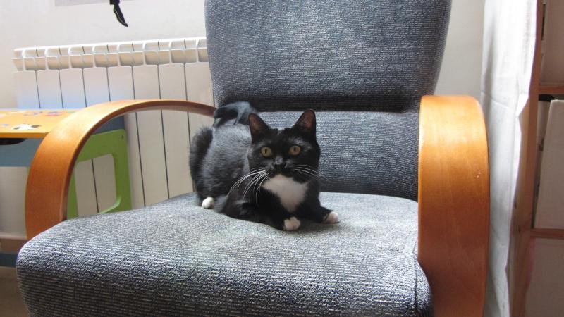 Milka, la gatita más dulce ha llegado a nuestra casa!!! Milka_12