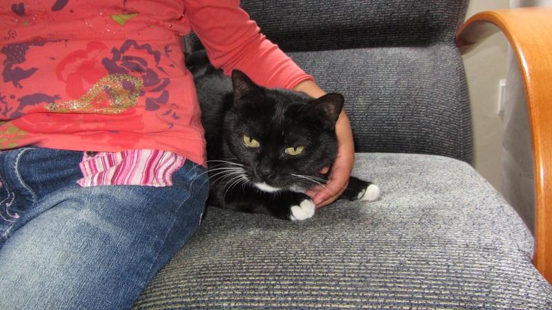 Milka, la gatita más dulce ha llegado a nuestra casa!!! Milka_14
