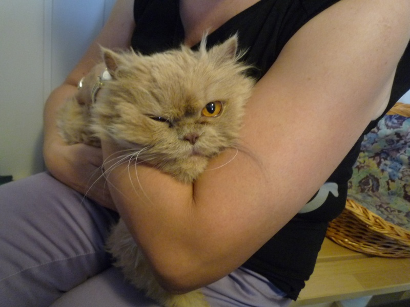 Kiara,preciosa persa muy cariñosa y tranquila.¡Adoptada! P1020716