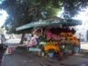 Mohammedia ou la ville des fleurs Dsc02524