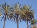Mohammedia ou la ville des fleurs Dsc02528