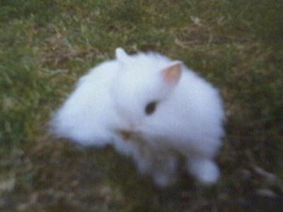 [lapin et chien]Coquine et Lucky Coquin12
