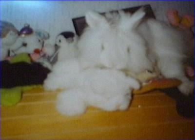 [lapin et chien]Coquine et Lucky Coquin13