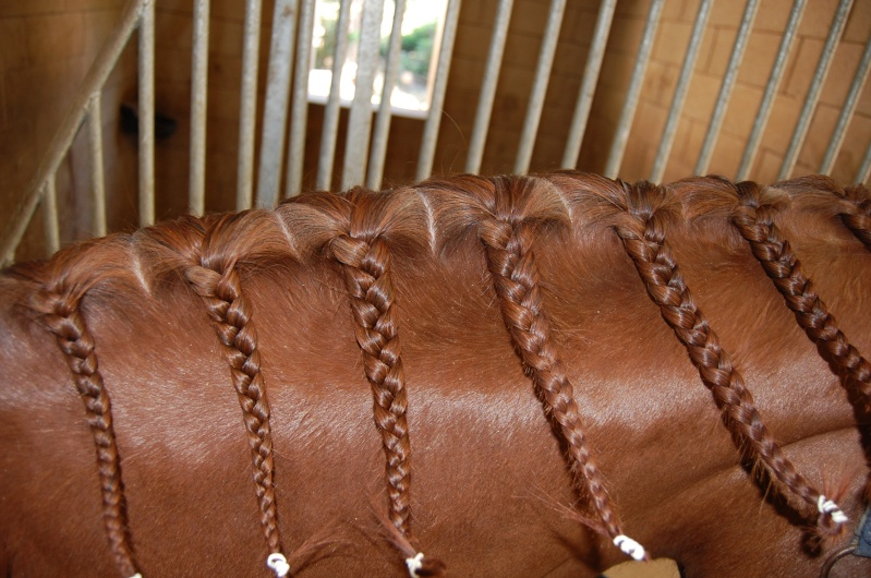 les chevaux.. Dsc_0011