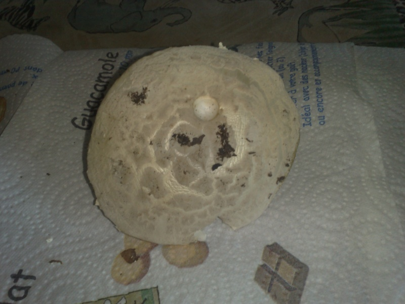 Premiers champignons ! 01012012