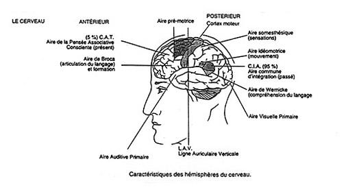 LA KINESIOLOGIE 1 Cia11