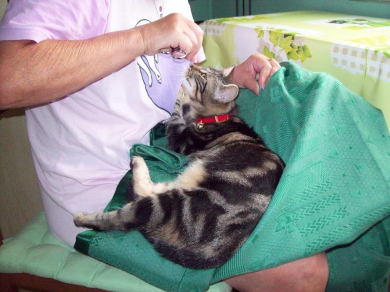 Spécials Photos : Avant/Après de nos chats - Page 5 100_2010