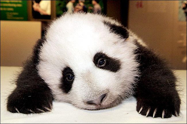 Guild Photo ? Panda10