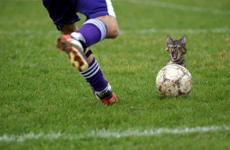 اغرب القطط في العالم...... 10720010